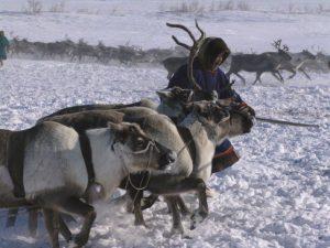 Поставили и смонтировали оборудование на убойный участок в Ямало-Ненецком АО